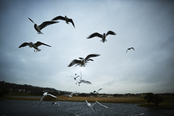 Premium photographer example: Flock of seagulls flying near lake in Ireland