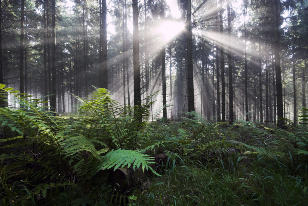 Fern, back light, forest, Imagebroker