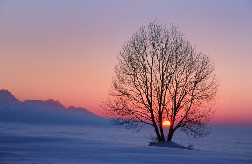 tree silhouette, sunset, Zugerberg, Switzerland, Winter, Mist, Imagebroker
