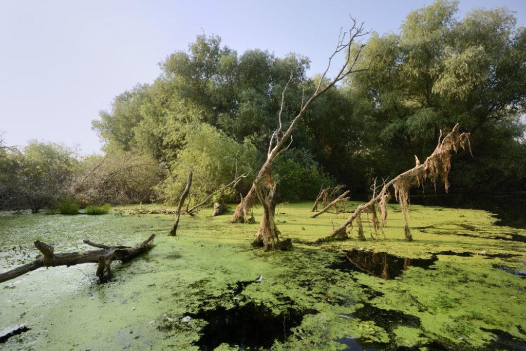 Danube Delta, Romania, Image Broker