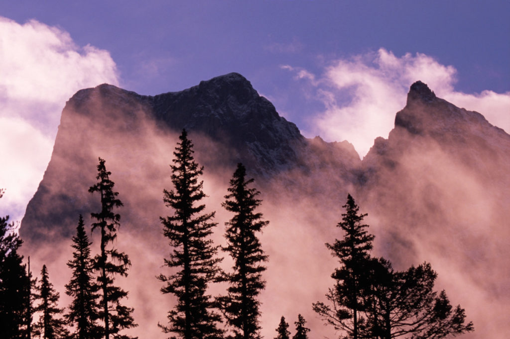 Danita Delimont Royalty Free, Trees, silhouette, mist, mountains, sunrise, Yoho National Park, British Columbia, Canada, commercial royalty free, panthermedia
