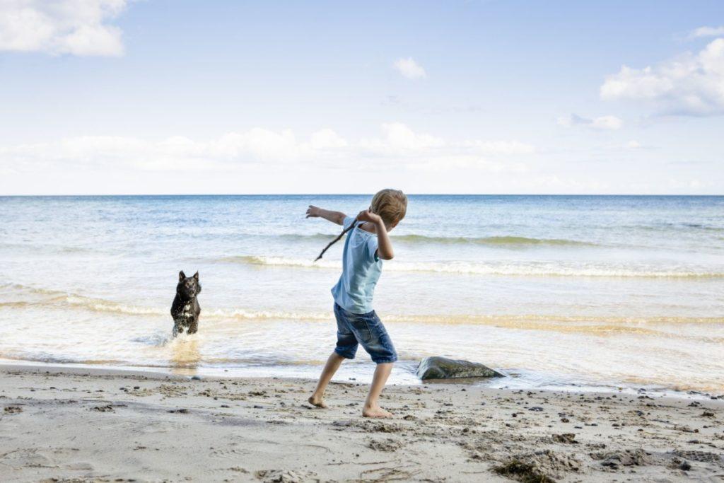 Junge strand dänemark hund haustier urlaub spaß stöckchen