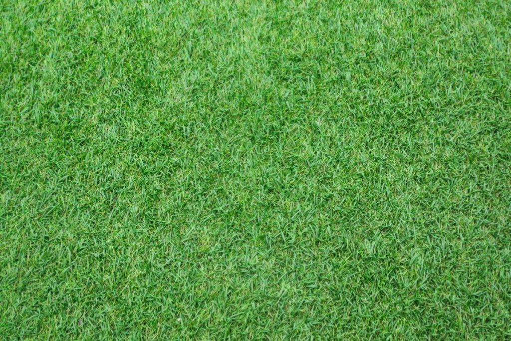 Rasen spielfeld gras lizenzfrei foto bild hintergründe
