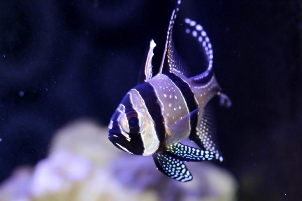 Inspiration Natur Kardinalfisch lizenzfreie Bilder panthermedia