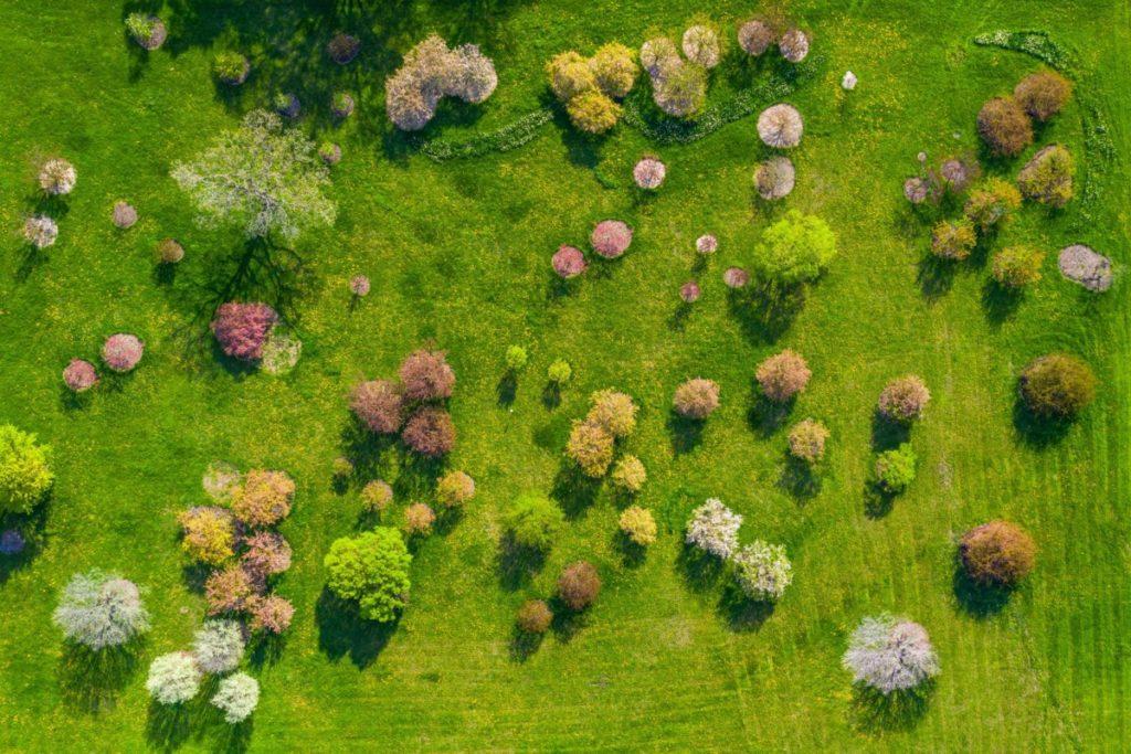 Drohnenfotos Luftaufnahme Bäume farbenfroh Lizenzfreie Bilder PantherMedia
